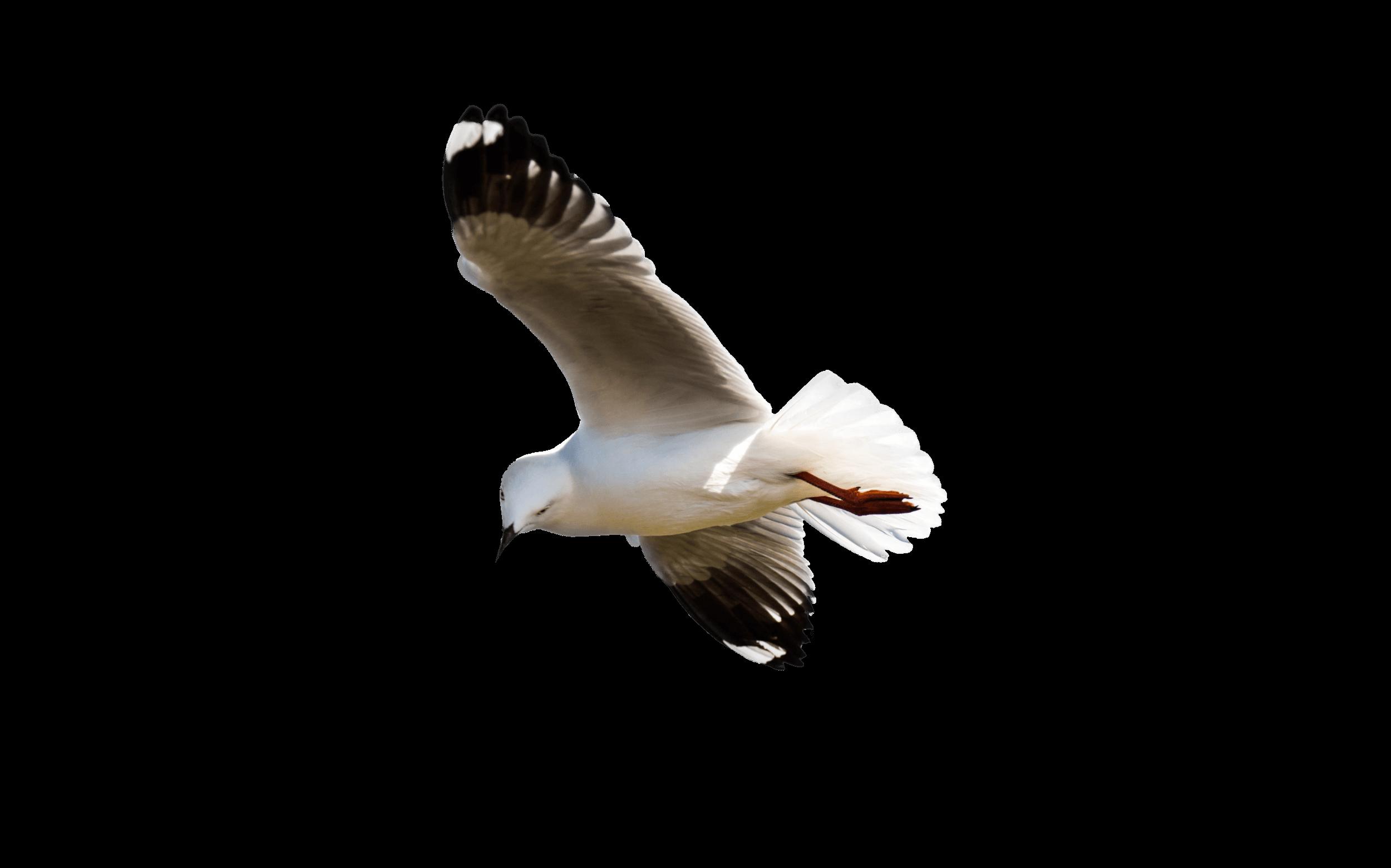 Gull in Newfoundland, Canada